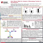 Novel Mouse Model for Analysis of Macrophage Function in Neuroblastoma by Gabrielle L. Brumfield, Shelby M. Knoche, Alaina C. Larson, Brittany Poelaert, Benjamin T. Goetz, Poomy Pandey, Don W. Coulter, and Joyce C. Solheim