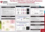 The Role of PAF1/PD2 in Inducing Drug Resistance In Pancreatic Cancer Cells by Aditi Jain, Sanchita Rauth, Surinder K. Batra, and Moorthy P. Ponnusamy