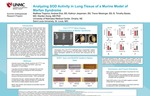 Analyzing SOD Activity in Lung Tissue of a Murine Model of Marfan Syndrome